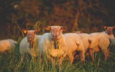 Vente de viande directe éleveur