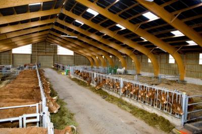 Viande direct producteur Provence